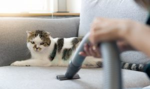 cropped picture of a person vacuuming a couch and a cat sitting on the couch